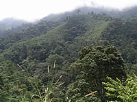 Forest at Buenaventura Reserve
