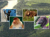 The area in Borneo saved