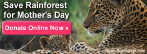 Make a donation now to save rainforest for Mother's Day