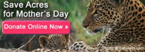 Make a donation for Mother's Day