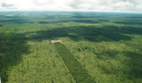 Deforestation in the Chaco