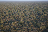 Aerial view of the Dry Chaco