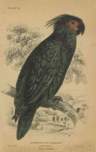 Edward Lear exhibition opens at WLT gallery