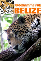 Purchase acres of threatened tropical forest in Belize