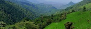 Landscape photograph of the forested mountains of Buenaventura Reserve