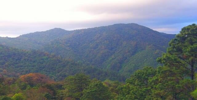 Photograph of Güisayote Biological Reserve in western Honduras. © WLT / Ruth Canning.