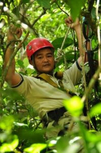 Warden with protective gear in a tree
