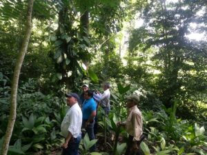 Participants in the forest (Xate Plot). © FUNDAECO.