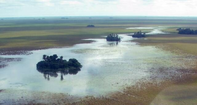 Aerial view of the forested islands of the Beni savanna.