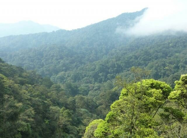 Mountainous, tree covered landscape with cloud