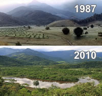 Treeplanting and wetland restoration over 25 years have already transformed REGUA's Guapi Assu reserve