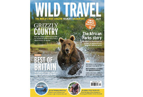 Front cover of Wild Travel magazine showing a bear running towards the viewer