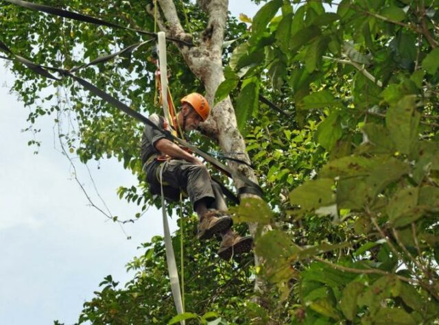 Ken Krank suspended from ropes high in the trees.