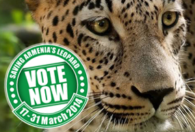 Leopard image with Vote Now button over it.