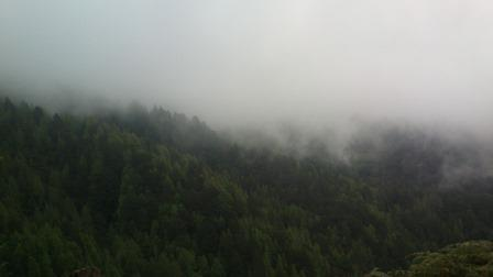View of forested hillside in cloud.