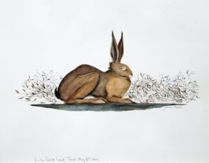 Watercolour of a sleeping hare.