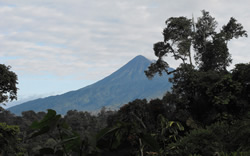 Sumaco from the narupa reserve