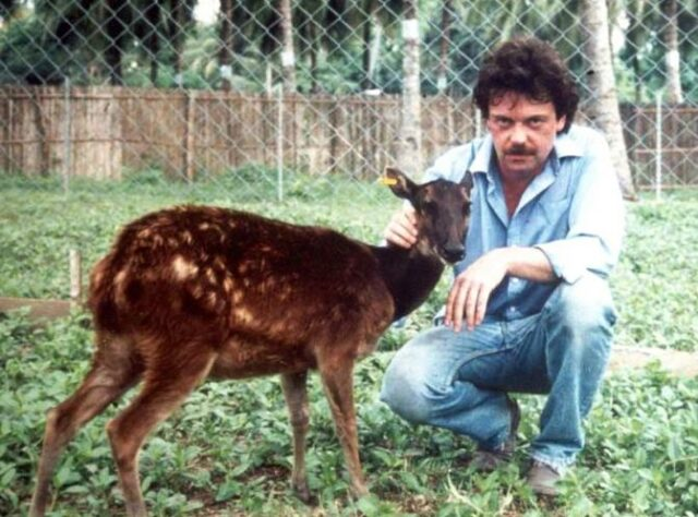 William Oliver with a tame female Visayan Spotted Deer.