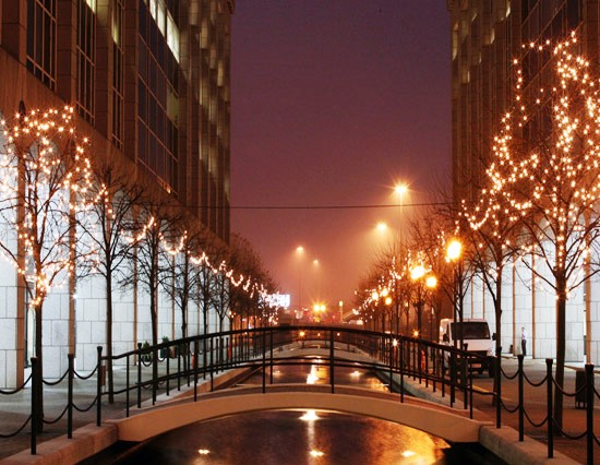 View of trees with fairy lights in a street at night.