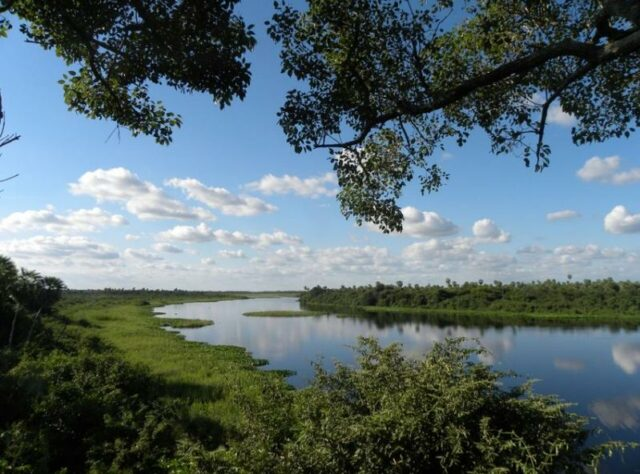 View over the Chao-Pantanal reserve in Paraguay, from the viewing tower.