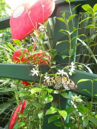 Love Your Zoo week at Tropical World.