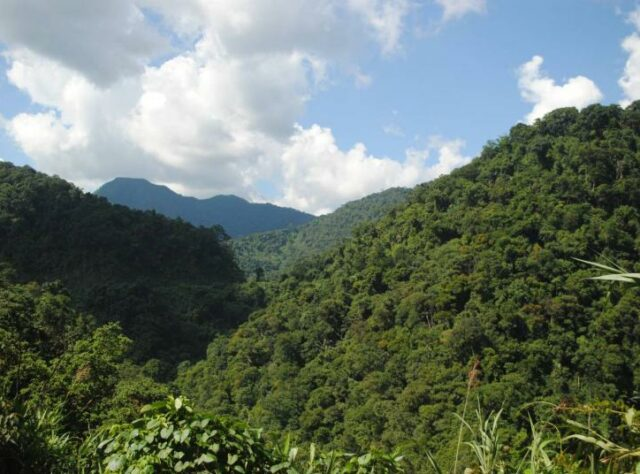 Khe Nuoc Trong forest.