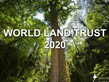 Front cover of WLT 2020 with a background image of a forest tree photographed from below looking up into the canopy.