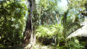 Tropical forest at RBCMA.