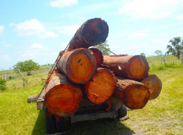 Confiscated logs.