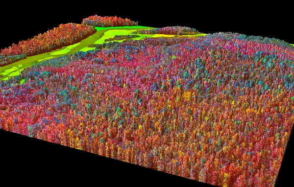 Spectral map of forest