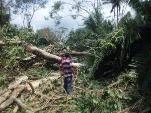 Pictures from the Hurricane Earl damage at Rio Bravo. Credit Programme for Belize.
