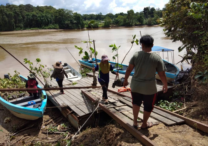 Tree planting expedition in Borneo