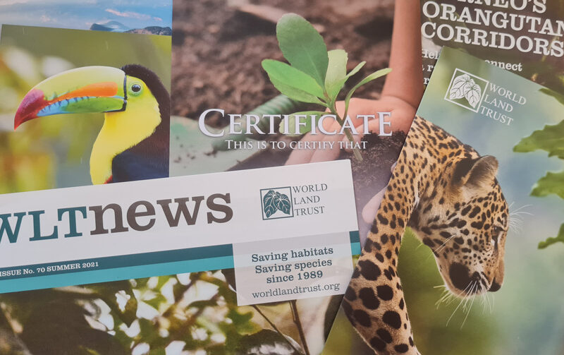 WLT certificates and newsletter