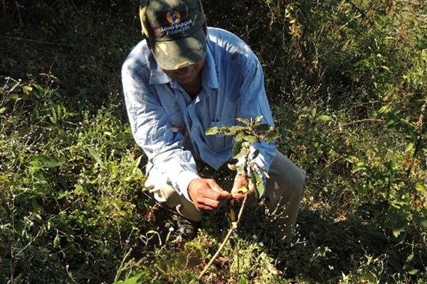 Planting trees in Andean Forest