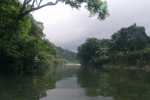 Forests of Khe Nuoc Trong, Vietnam