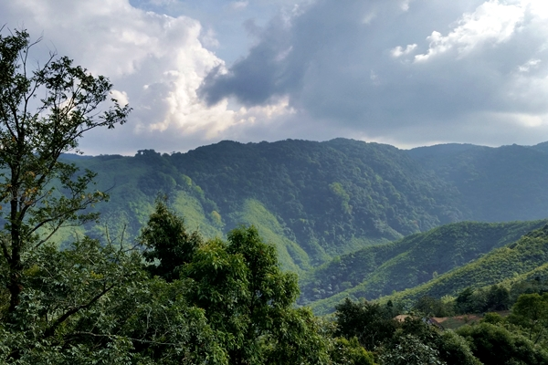 View of Garo Hills's forests and lands cleared by jhumming.