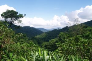 The beautiful forests of Khe Nuoc Trong, Vietnam.