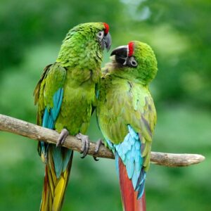 Military Macaws, WLT News Spring 2018 cover. Image: Ondrej Prosicky/Shutterstock