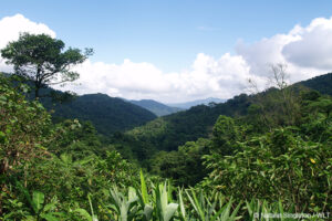 Vietnamese Tropical Forest