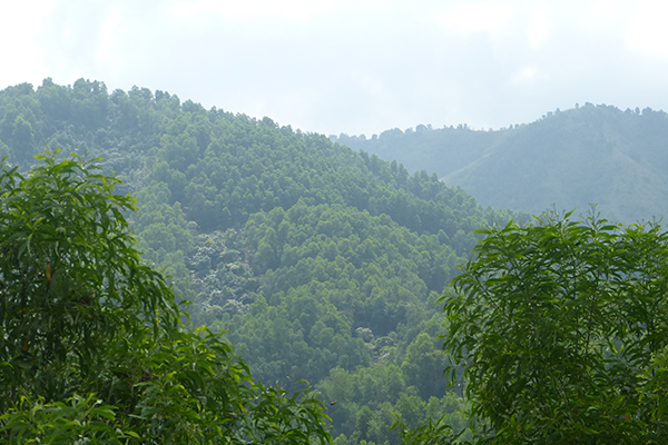 The Annamite lowland forests of Bac Huong Hoa © Mark Stanley Price