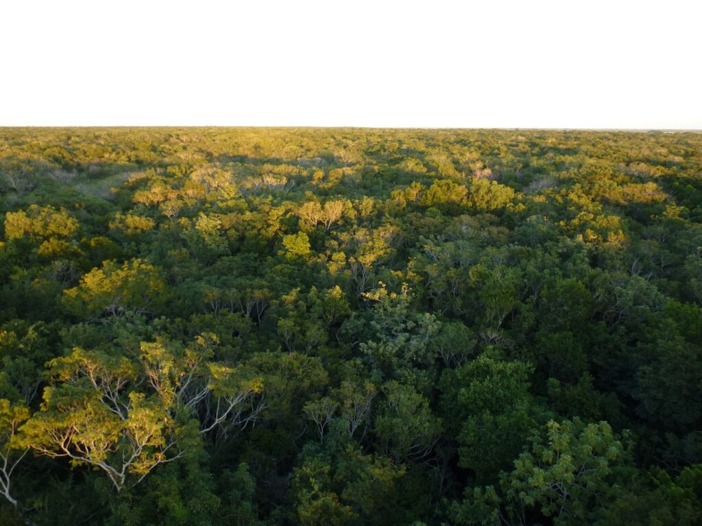 View over the canopy of Shipstern Nature Reserve, Belize.