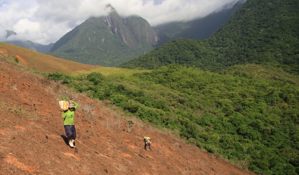 People planting trees on a hillside at REGUA, Brazil.