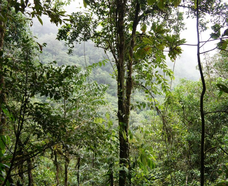 San Isidro rainforest in Guatemala protected by FUNDAECO