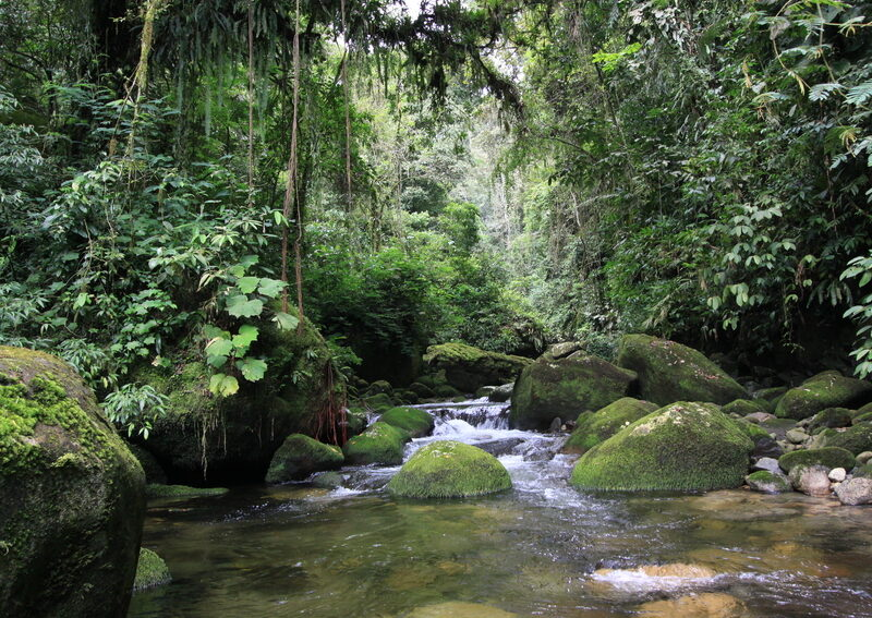 View of a mountain stream at REGUA, Brazil. Chris Knowles.