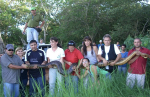 A Green Anaconda being carried by a group of people.
