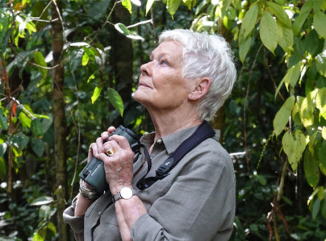 Dame Judy Dench in the forests of Malaysian Borneo. Image credit: PA photo/ITV/Atlantic Productions.