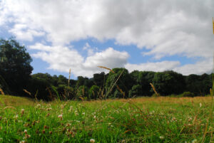 A view of meadow and woodland at Kites Hill reserve ©Claire Whittenbury