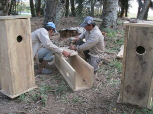 Rangers building Blue-throated Macaw nestboxes ©WLT/Charlotte Beckham