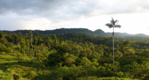 View of Canandé Reserve, Nigel Simpson