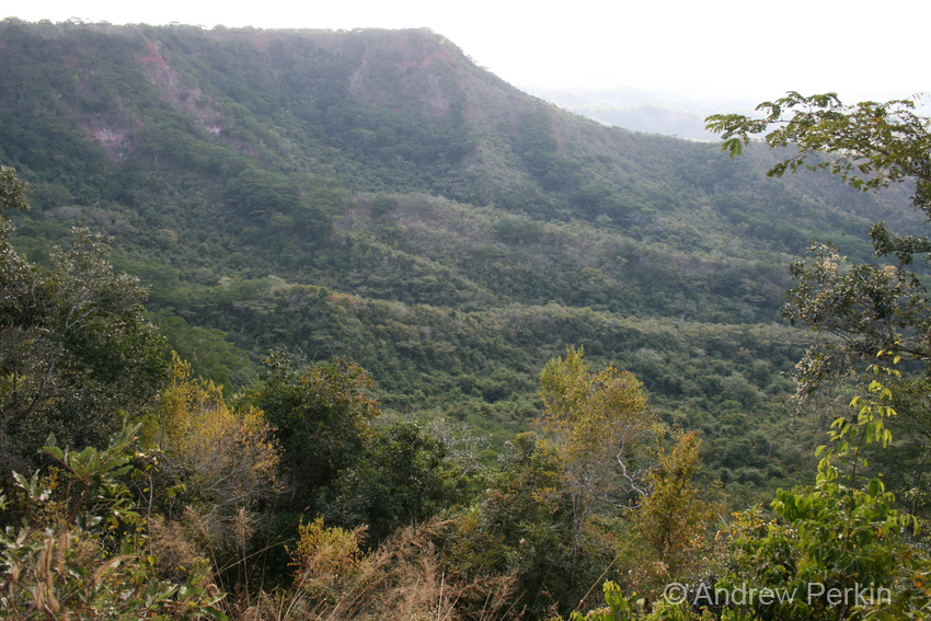 A view of forest landscape, Tanzania